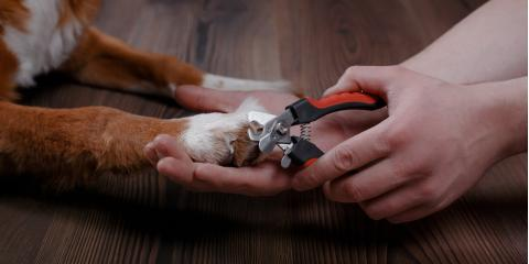 Why Nail Trimming Is Necessary for Dog Care, Ewa, Hawaii