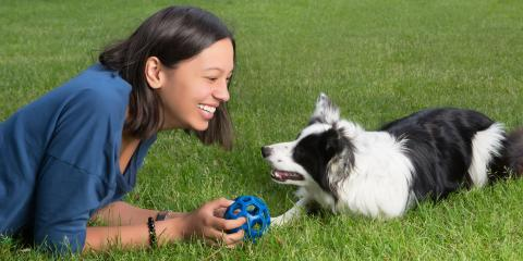 5 Ways to Protect Your Dog From the Summer Heat, Ewa, Hawaii