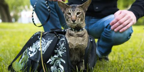How the Right Crate Can Help Get Your Cat to the Veterinarian, Ewa, Hawaii