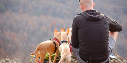 Waipahu's Best Veterinary Hospital Shares 5 Tips for Hiking With Your Dog, Ewa, Hawaii