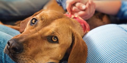 5 Animal Care Tips for Your Pet in Honor of National Animal Safety & Prevention Month, Ewa, Hawaii