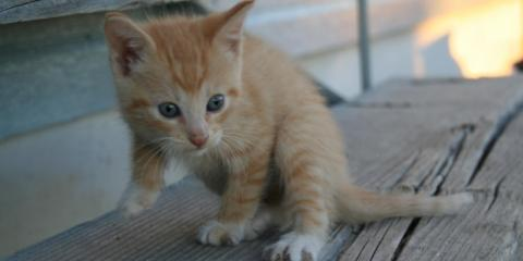 3 Animal Care Tips For National Adopt a Cat Month, Ewa, Hawaii