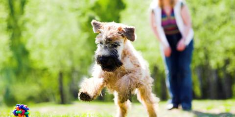 4 Dog Care Tips for Keeping your Pet Safe This Summer, Ewa, Hawaii