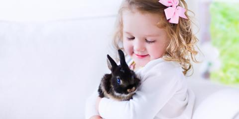What to Know About Having a Pet Rabbit , Lincoln, Nebraska