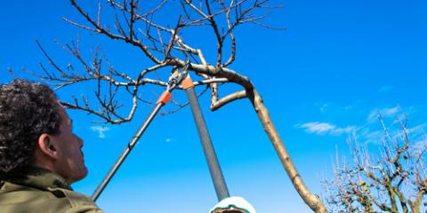 When You Should Call for Tree Pruning Services, Commerce, Georgia