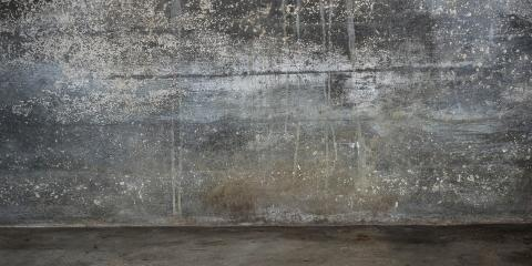 3 Reasons Why Mold Remediation Is Important, Yorkshire, Virginia