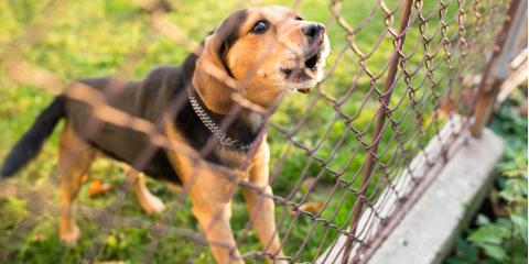 Wallingford Dog Bite Lawyer Offers Tips for Preventing Dog Attacks, Wallingford, Connecticut
