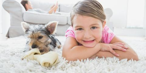 Carpet Cleaning Experts Share the 3 Most Common Causes of Carpet Mold, Walton, Kentucky