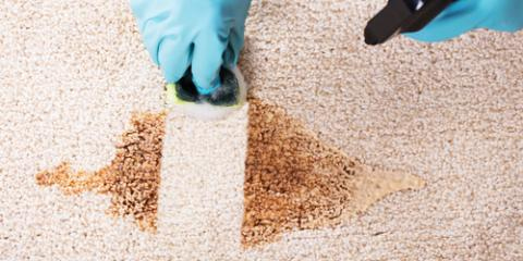 3 Health Benefits of Hiring Professional Carpet Cleaners, Walton, Kentucky