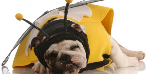 3 Tips for Keeping Your Dog Safe This Halloween, Walworth, New York