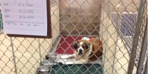 4 Qualities to Look for When Choosing a Kennel, Walworth, New York
