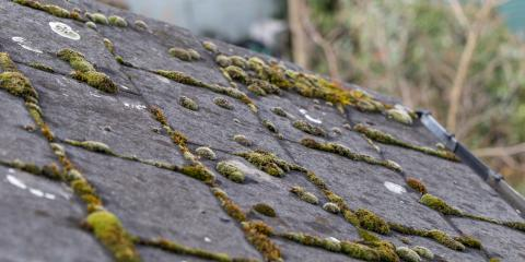 Why Does Algae Grow on Your Roof?, Port Orchard, Washington