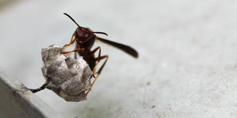 3 Reasons to Leave Wasp Removal to the Professionals, Carlsbad, New Mexico