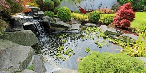 How to Treat Pond Algae & Prevent Its Return, Columbia, Missouri