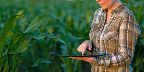 What Is Drip Irrigation?, Waterford, Connecticut