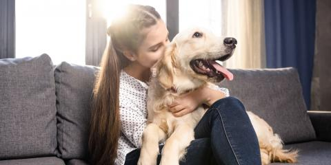 What to Know Before Adopting a Dog, Waynesboro, Virginia