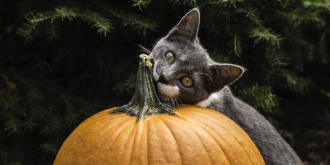 4 Thanksgiving Foods to Keep Away From Cats and Dogs, Waynesboro, Virginia