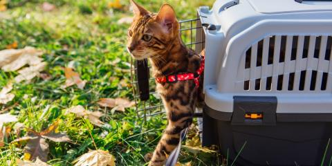 How to Get Your Cat Into a Carrier, Waynesboro, Virginia