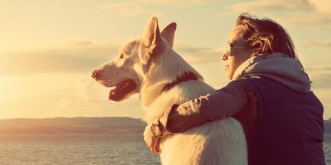 Veterinarian Shares 3 Points to Remember About Senior Dogs, Waynesboro, Virginia