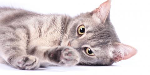 Animal Health Care: 4 Surprising Benefits of Spaying & Neutering, Waynesboro, Virginia