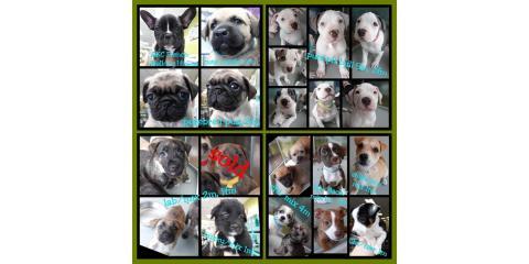 Current Puppies!, Ewa, Hawaii