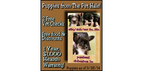Puppies Available 9 28 14 The Pet Hale Ewa Nearsay