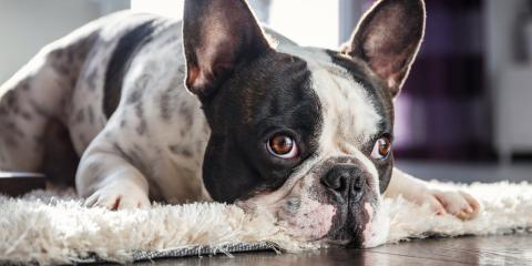 How to Choose the Best Carpet for a Pet-Friendly Home, Webster, New York