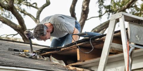 Roofers Share 3 Ways Trees Can Harm Your Roof, Webster, New York