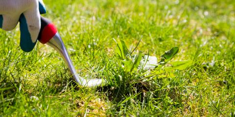 Weed Control Experts Share 3 Tips to Get Rid of Crabgrass, Enterprise, Alabama