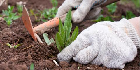 4 Reasons to Hire a Professional Weed Control Company, Lodi, California