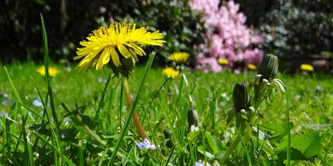 5 Weed Control Tricks That Work for Your Lawn, Danbury, Connecticut