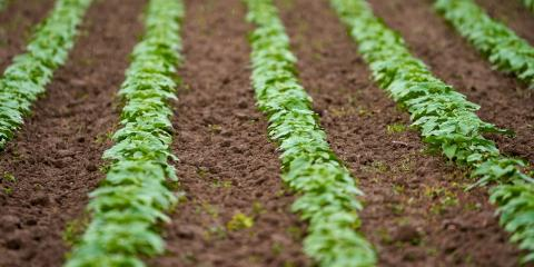 What Are the Benefits of Drip Irrigation?, New Prague, Minnesota