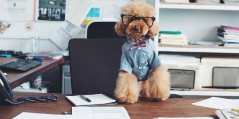 Save Up to 50% On Dog Merchandise. Starts Today!, Manhattan, New York