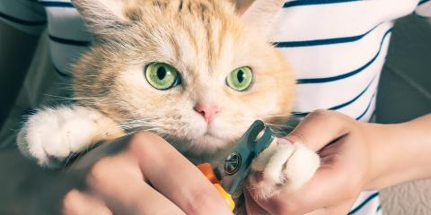 5 Tips for Trimming Cat Claws, Mineral Springs, North Carolina