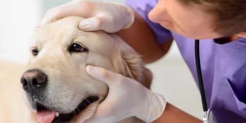 Why Annual Pet Wellness Exams Are Important, Mineral Springs, North Carolina