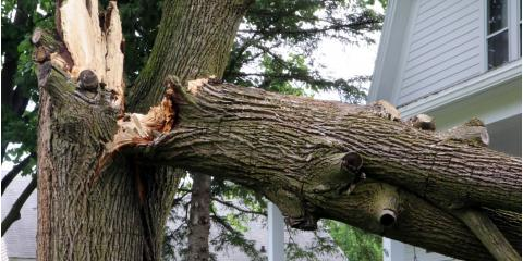 3 Factors to Consider Before Cleaning Up Storm-Damaged Trees, West Hartford, Connecticut