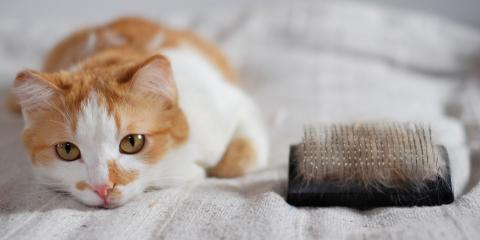 How to Prevent Hairballs, Mineral Springs, North Carolina