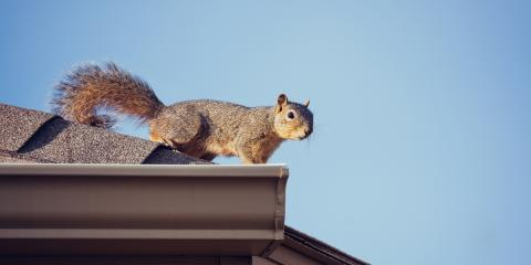 4 Ways To Keep Pests Out Of Gutters, Hamilton, Wisconsin