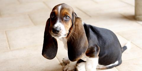 West Side Animal Clinic: Pet Eye Health 101, Hamilton, Ohio
