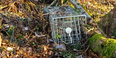 3 Signs You Need to Call Wildlife Removal Professionals, Brewster, New York