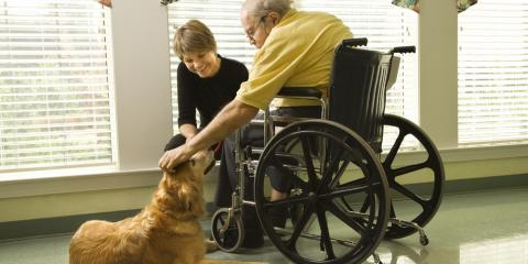 4 FAQ About Bringing Pets to Assisted Living Homes, Westport, Connecticut