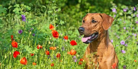 A Veterinarian Advises: 3 Things to Do When Your Dog Encounters Poison Ivy, Statesboro, Georgia