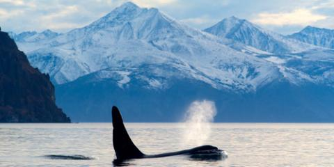 4 Species You'll Spot During a Whale Watching Tour, Juneau, Alaska