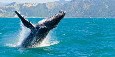3 Whale Watching Facts You Should Know , Honolulu, Hawaii
