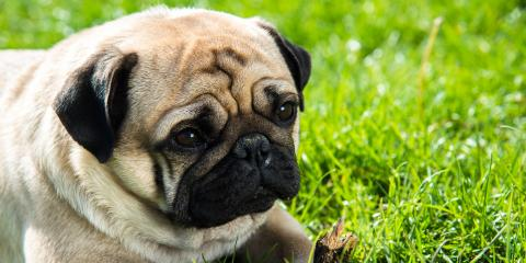 What to Know About Respiratory Problems in Dogs, Lincoln, Nebraska