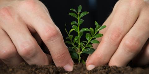 Tree Care: 3 Things to Consider Before Planting, Florence, Kentucky