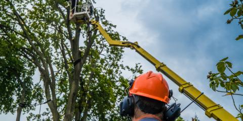 What to Look for in a Quality Tree Service , Hersey, Minnesota