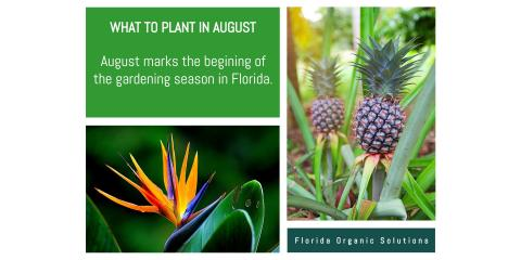 What to Plant in August, Brandon, Florida