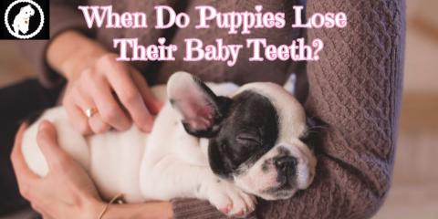 When Do Puppies Lose Their Baby Teeth Mias Bathhouse For Pets