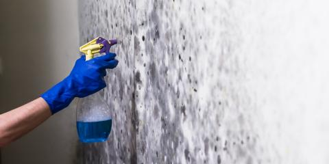 3 Reasons Professional Mold Remediation Is Important, Whitefish, Montana